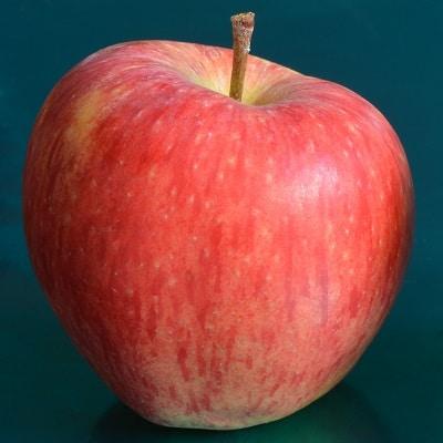 яблоко Саффлок пинк
